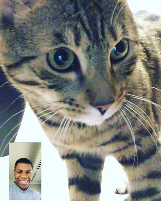 Boyega FaceTime Oluwalogan cat